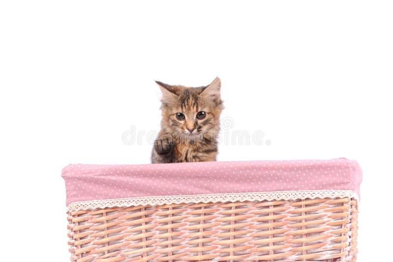 Chat mignon dans le panier image stock