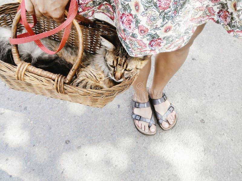 Chat mignon dans le panier, femme marchant avec son animal familier dans le summe chaud image stock