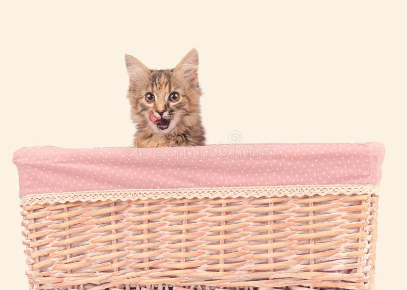 Chat mignon dans le panier sur le blanc photo stock