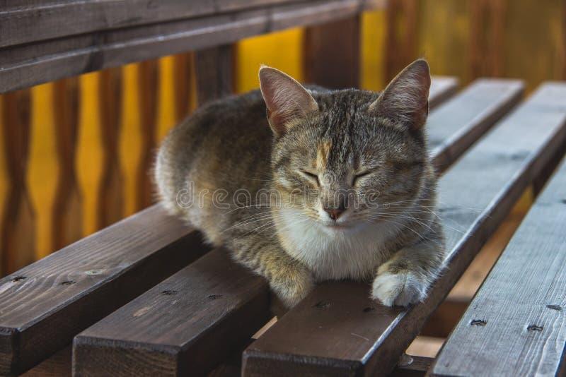 Chat mignon dormant sur un banc images stock