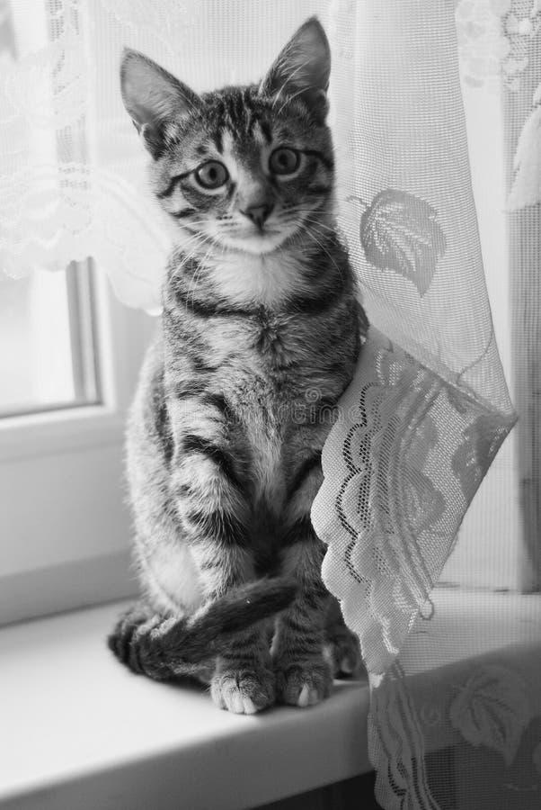 Chat mignon jouant à la maison images stock