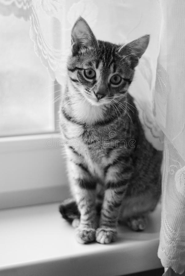 Chat mignon jouant à la maison images libres de droits