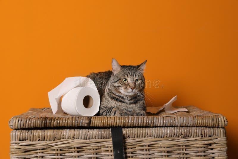 Chat mignon jouant avec le rouleau de papier hygiénique sur le panier photos libres de droits