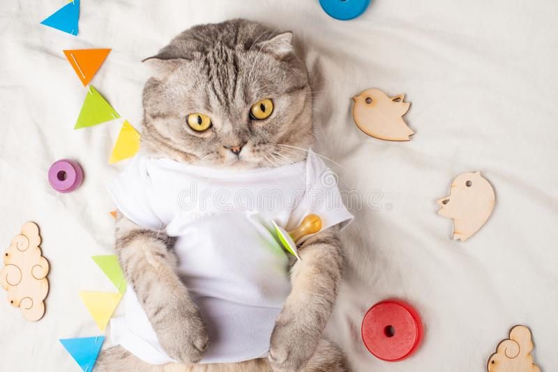 Chat mignon même de bébé, avec des jouets et une tétine Dans un T-shirt blanc, se trouvant sur le sien de retour Kitty, animal dr photo stock