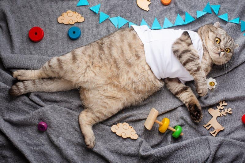 Chat mignon paresseux dans un T-shirt, mensonges drôles avec des jouets Rêves doux et un animal somnolent Vue de ci-avant photos stock