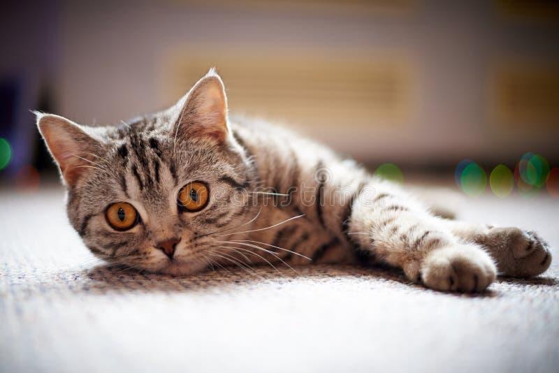 Chat mignon se trouvant sur le plancher sur un fond brouillé avec le bokeh photographie stock libre de droits