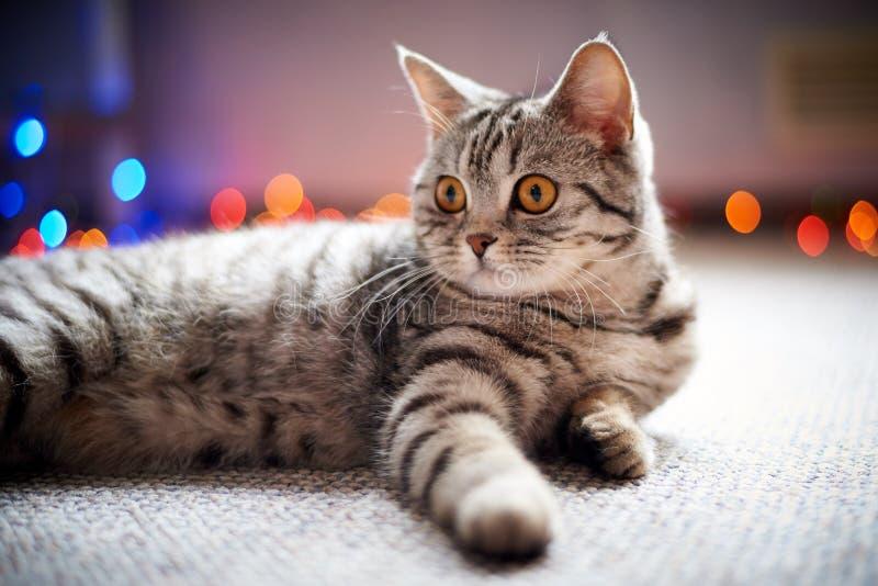 Chat mignon se trouvant sur le plancher sur un fond brouillé avec le bokeh photo libre de droits