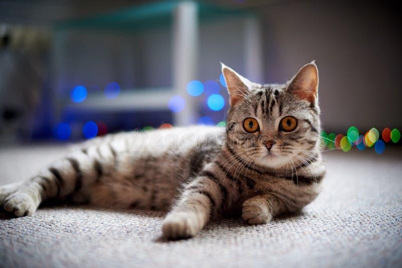 Chat mignon se trouvant sur le plancher sur un fond brouill? avec le bokeh photos stock