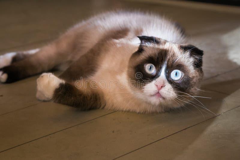 Chat mignon se trouvant sur le sien de retour sur le tapis image stock
