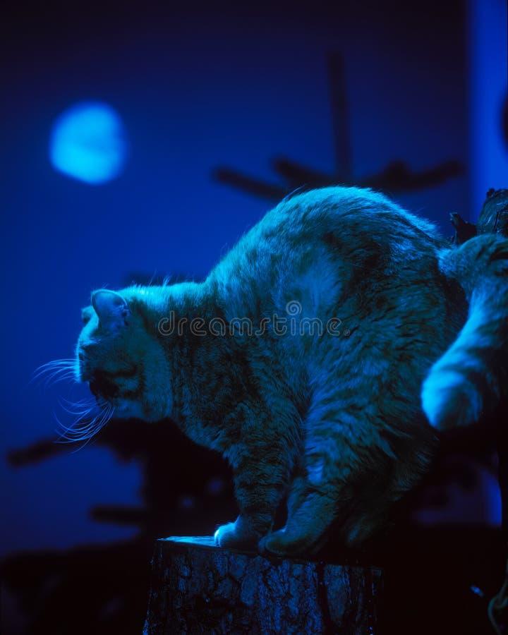 chat moonlit illustration libre de droits