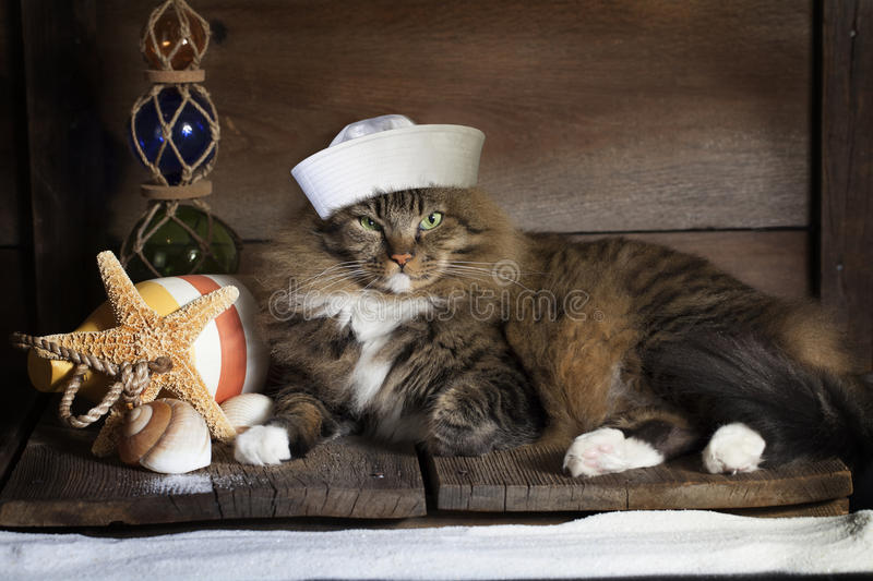 Chat nautique images stock