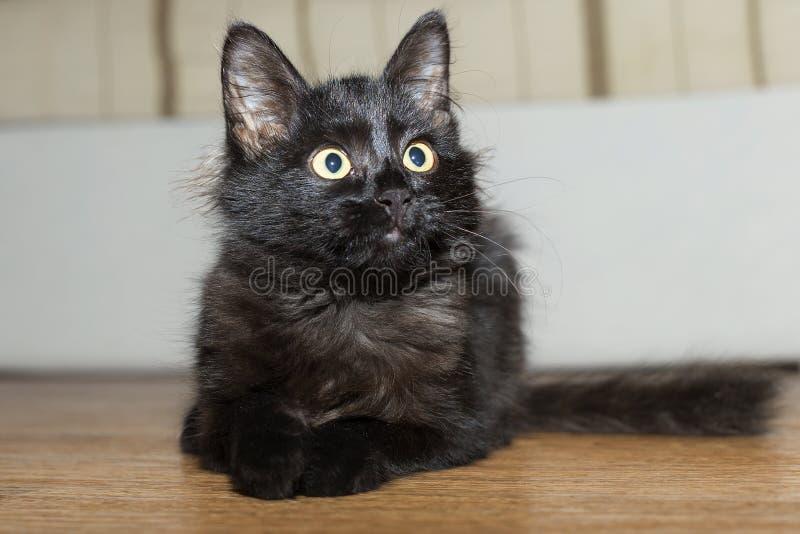Chat noir image stock