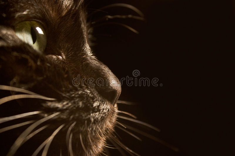 Chat noir photos libres de droits