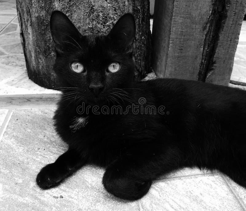 Chat noir photos libres de droits