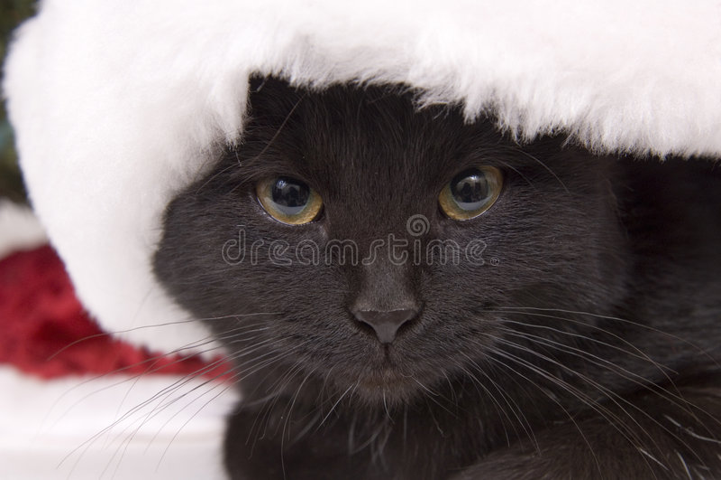 Chat noir avec le grand chapeau de Santa photos libres de droits