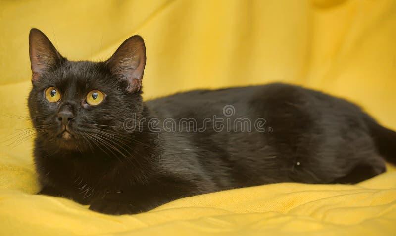 Chat noir avec les yeux jaunes photographie stock