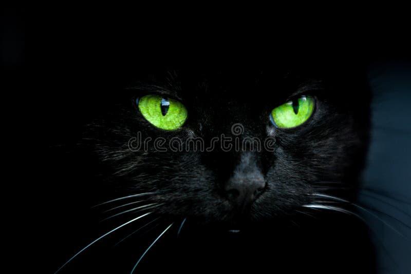Chat noir avec les yeux verts photographie stock libre de droits