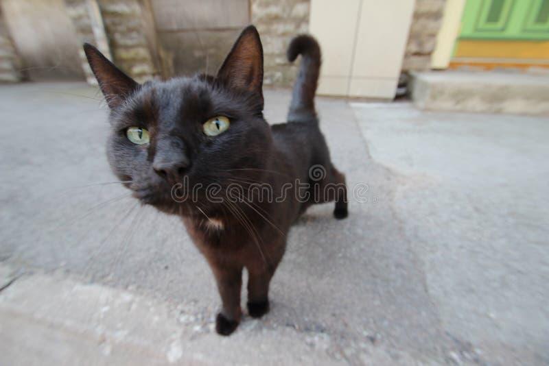 Chat noir curieux photos stock