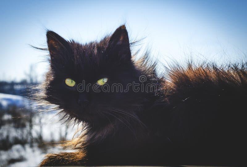 Chat noir dans la rue images libres de droits
