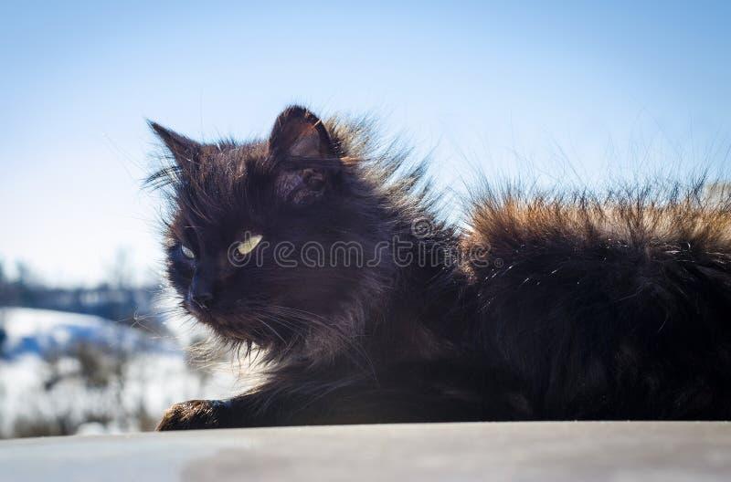 Chat noir dans la rue photographie stock libre de droits