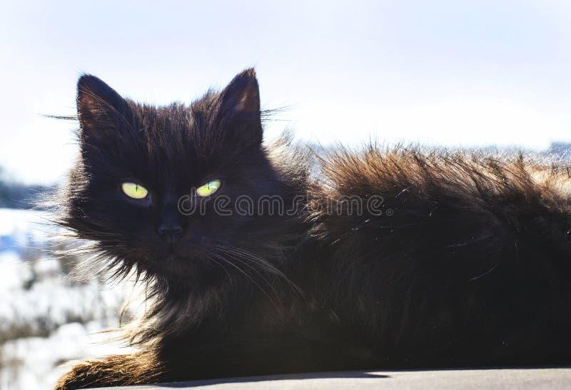 Chat noir dans la rue photo stock