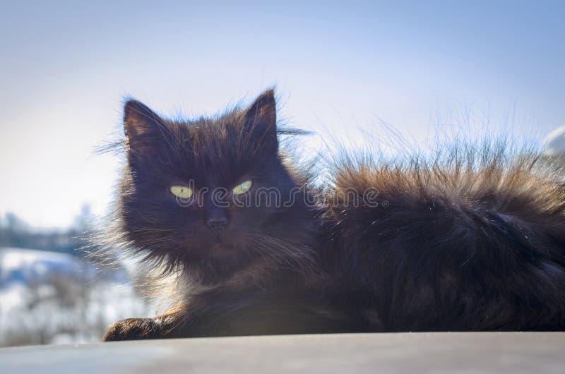 Chat noir dans la rue image libre de droits
