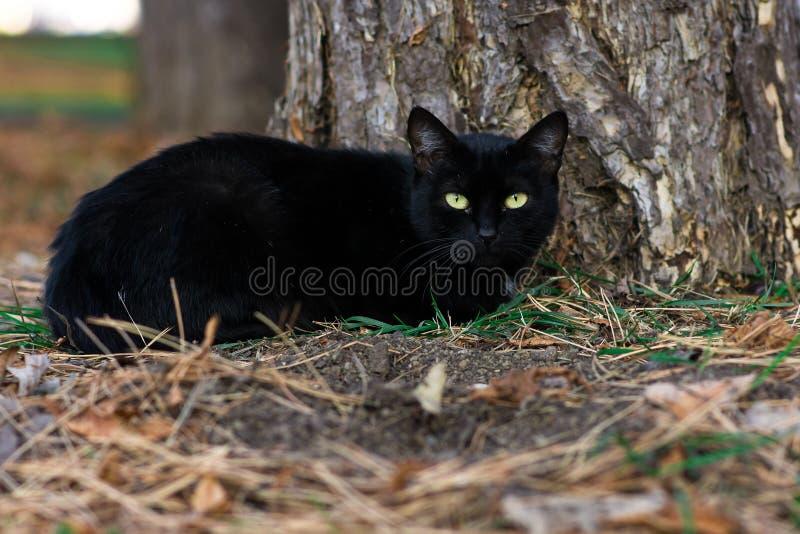 Chat noir en parc photographie stock libre de droits