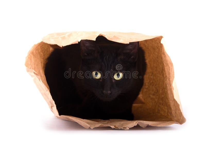 Chat noir espiègle se cachant dans un sac de papier brun images stock