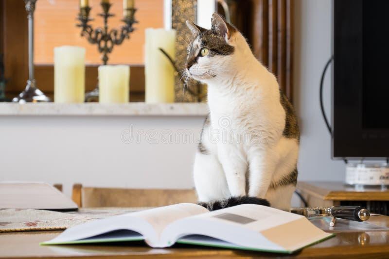 Chat noir et blanc à côté d'un livre photos libres de droits