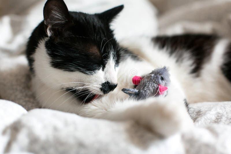 Chat noir et blanc mignon avec la moustache jouant avec le jouet de souris et léchant la patte, se toilettant sur le lit Minou dr photo stock