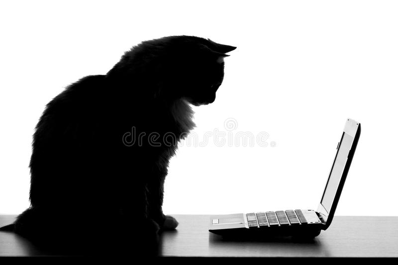 Chat noir et blanc semblant visuel sur un ordinateur portable photo stock