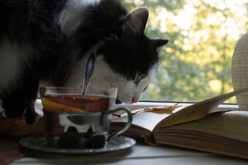 Chat noir et blanc sur le fond du thé avec le citron, la fenêtre, le livre ouvert et les feuilles d'automne image libre de droits