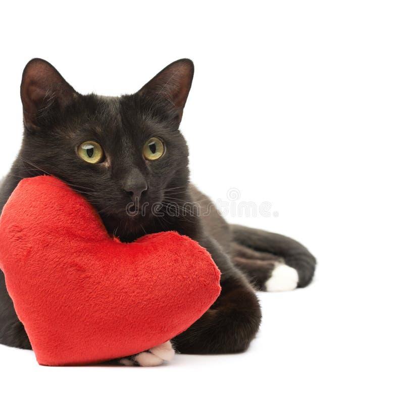 Chat noir et coeur rouge photographie stock libre de droits