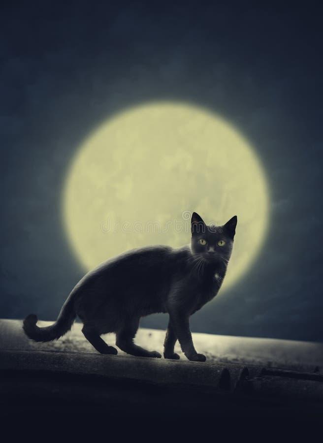 Chat noir et pleine lune image libre de droits