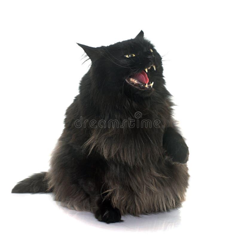 Chat noir fâché image stock