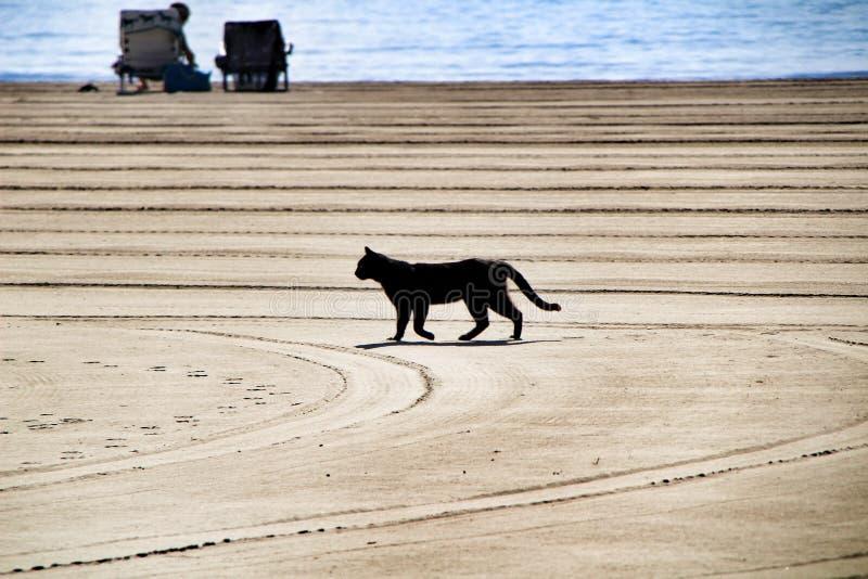 Chat noir marchant sur la plage images libres de droits