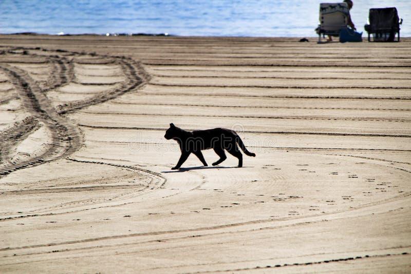 Chat noir marchant sur la plage photos stock