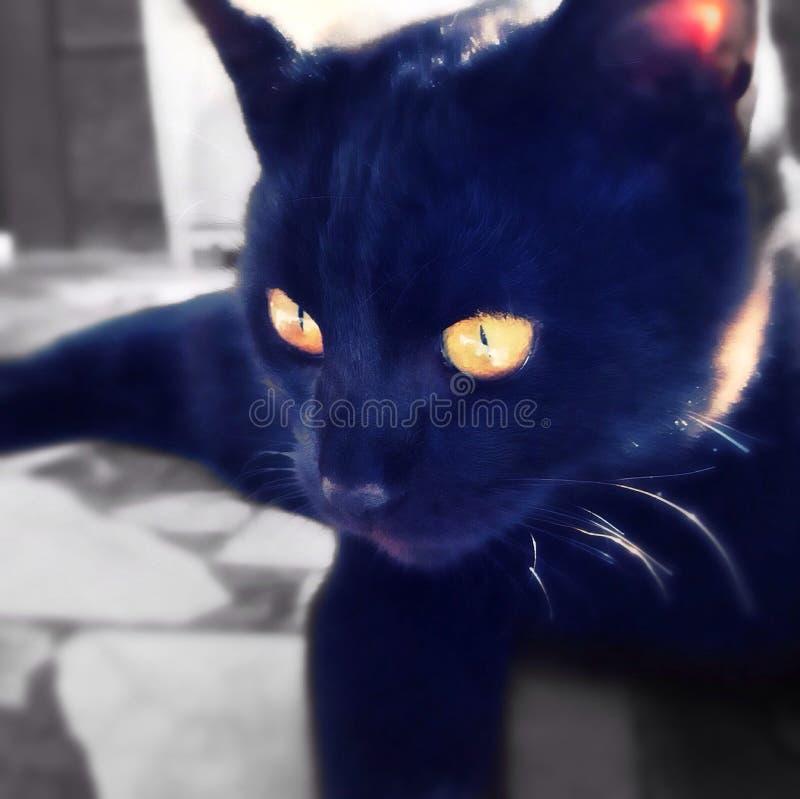 Chat noir mignon photo libre de droits