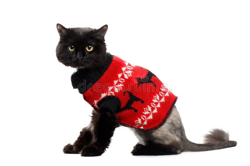 Chat noir portant dans un cardigan rouge de Noël photos libres de droits
