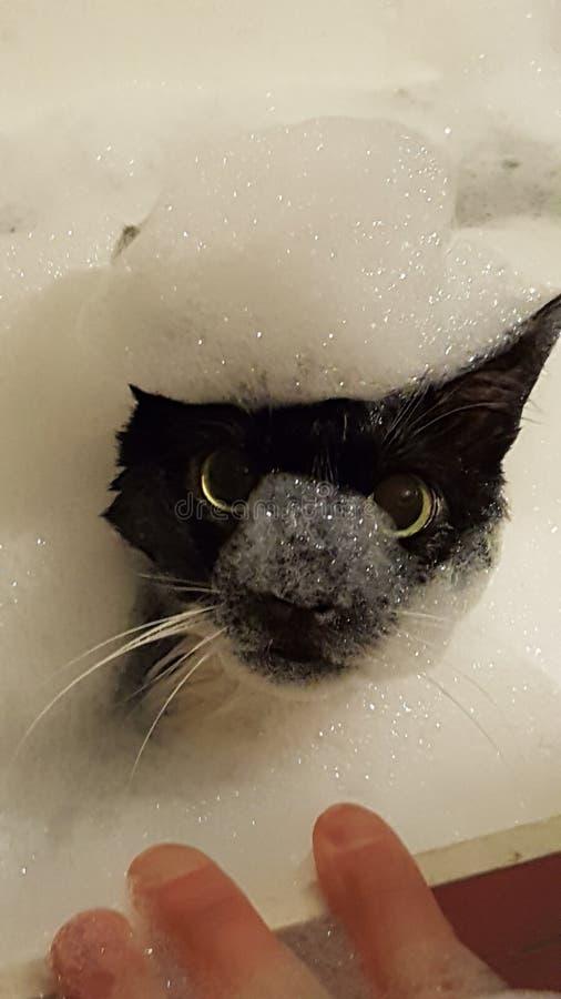 Chat noir principal de bulle photographie stock libre de droits