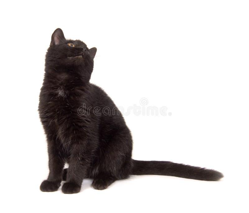 Chat noir regardant au-dessus de son épaule photos stock