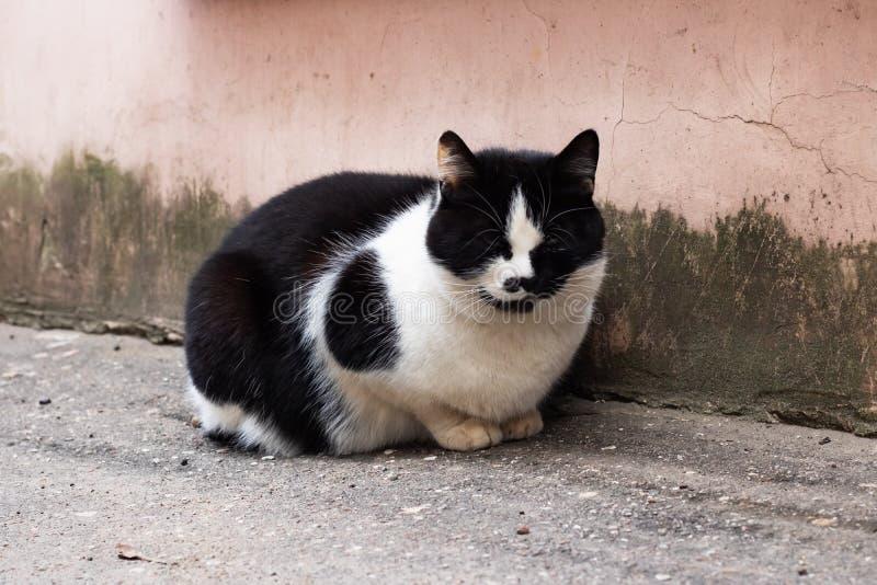 Chat noir sans abri avec la séance blanche de sein images libres de droits