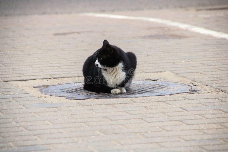Chat noir sans abri se reposant sur la trappe, fin  images libres de droits