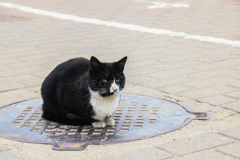 Chat noir sans abri se reposant sur la trappe, fin  photographie stock