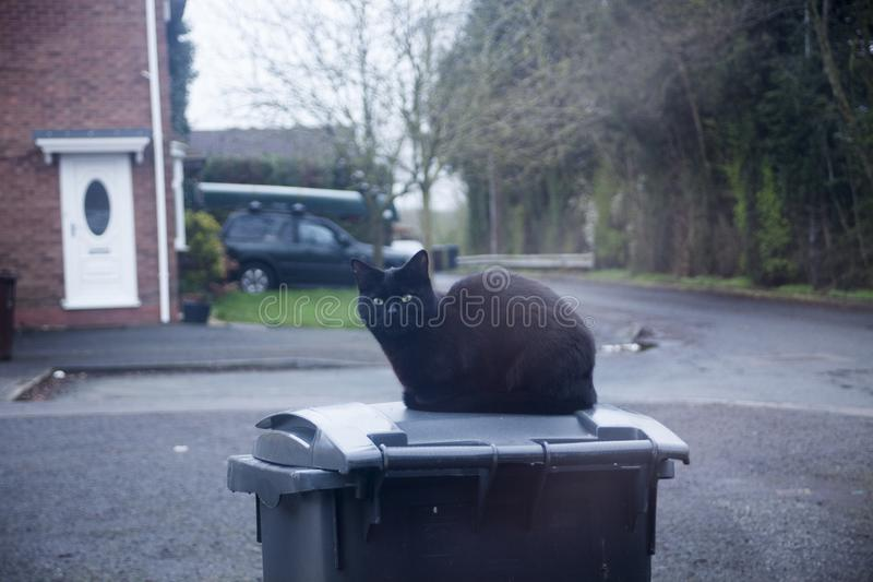 Chat noir se reposant et regardant par la fenêtre Plots réflectorisés regardant par la fenêtre Concept superstitieux avec le chat photo libre de droits