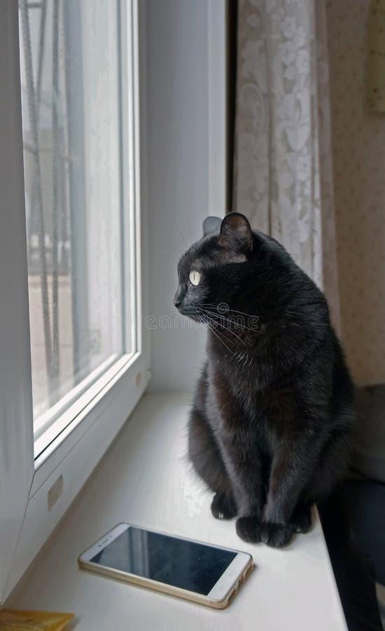 Chat noir se reposant sur le rebord de fenêtre près du téléphone portable photos libres de droits