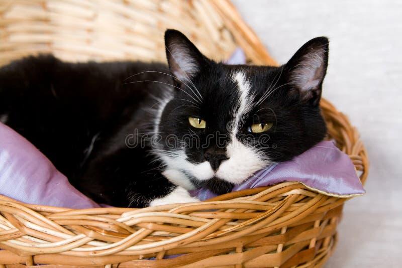 Chat noir se situant dans un panier avec l'oreiller photographie stock