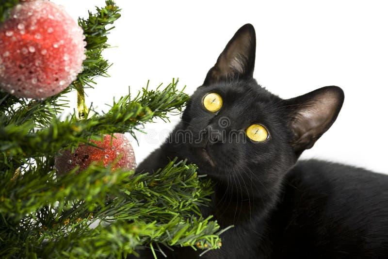 Chat noir se trouvant sous l'arbre de Noël photos libres de droits