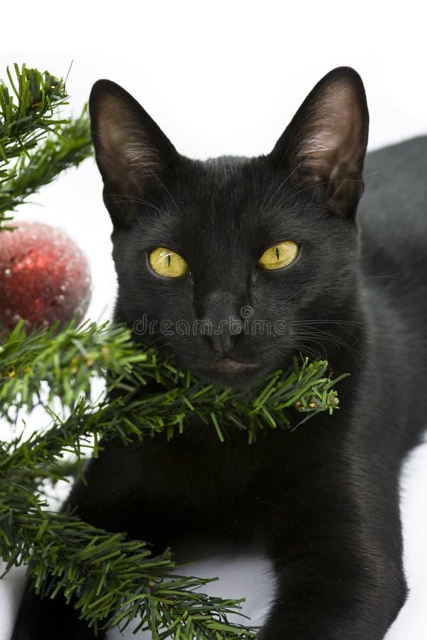 Chat noir se trouvant sous l'arbre de Noël photo libre de droits