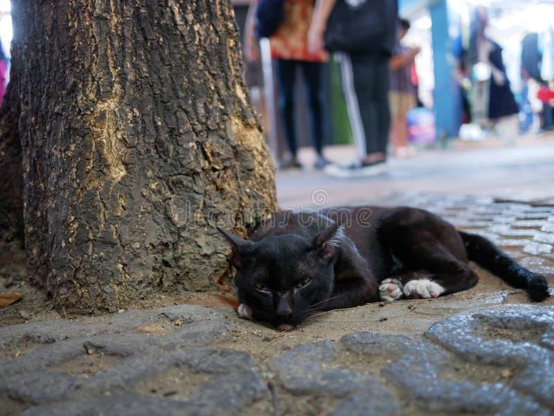 Chat noir sous l'arbre image stock